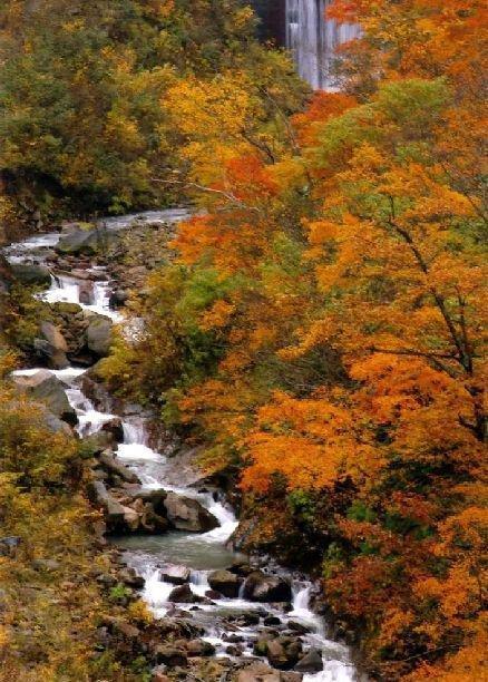 大田切渓谷の紅葉