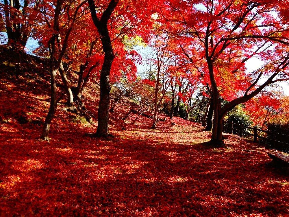 尾関山公園の紅葉