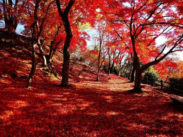 【紅葉・見頃】尾関山公園