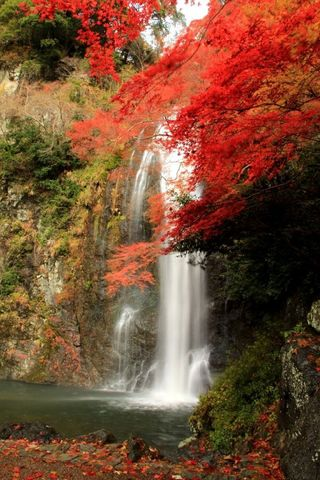 「箕面の滝」の画像検索結果