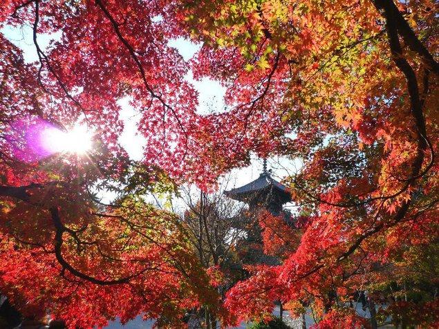 真如堂(真正極楽寺)の紅葉