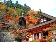 【紅葉・見頃】談山神社