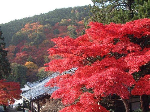 洛西(善峯寺)の紅葉