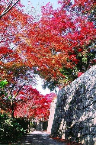 竹田(岡城阯)の紅葉