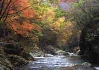 芦川渓谷の紅葉
