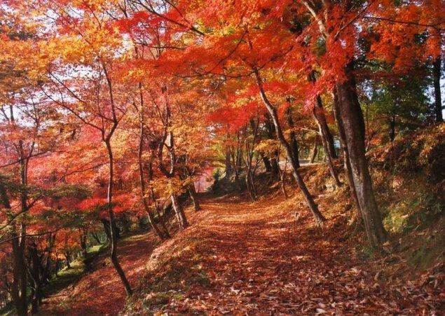 最上山公園 もみじ山の紅葉