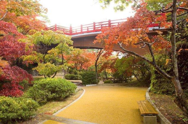 弥彦公園の紅葉