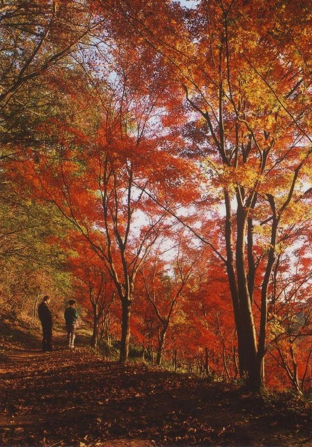 織姫公園もみじ谷の紅葉