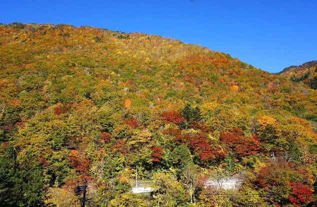 奥飛騨温泉郷の紅葉
