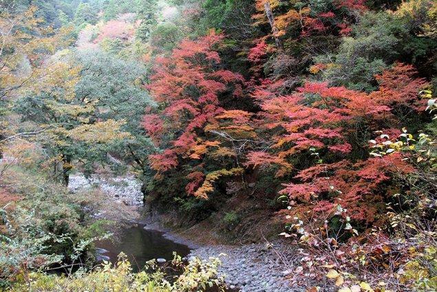 魚梁瀬西川渓谷の紅葉