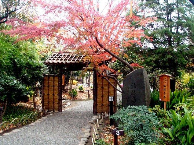 向島百花園の紅葉
