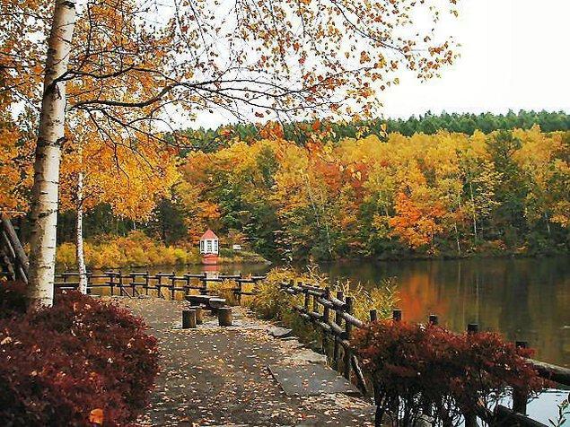 西岡公園の紅葉