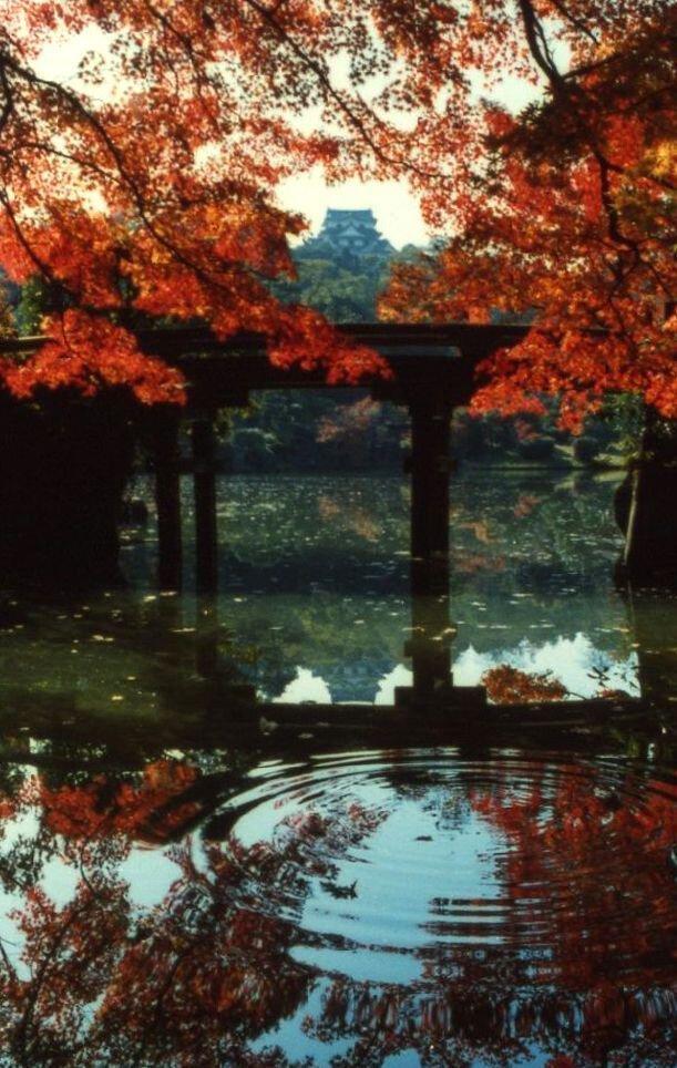 国宝彦根城・名勝玄宮楽々園の紅葉