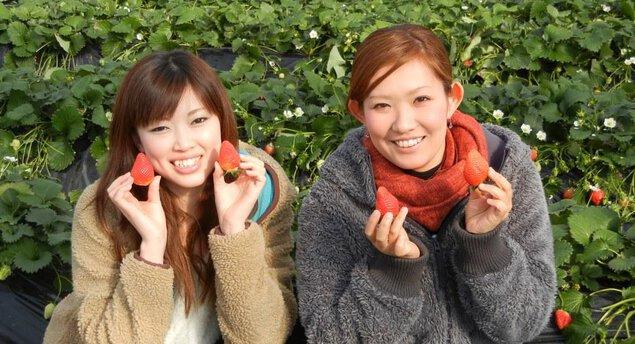 果実の里 原田農園 いちご狩り
