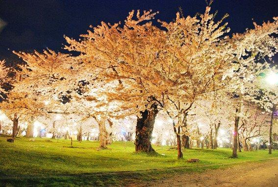 2019もりまち桜まつり