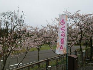 えぼし桜まつり