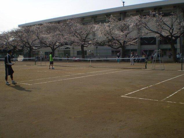上尾運動公園の桜