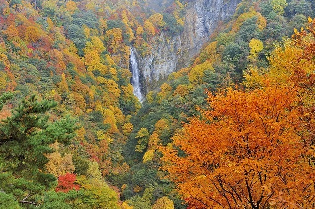 志賀高原の紅葉