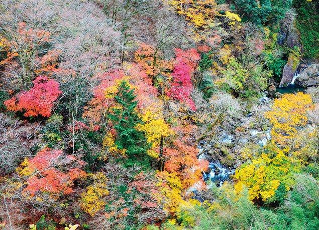 緑仙峡の紅葉