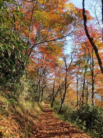 天狗高原の紅葉