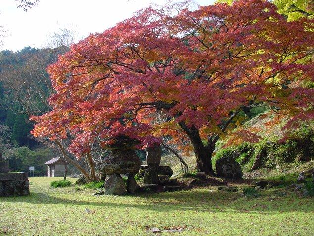 華山(神上寺)の紅葉
