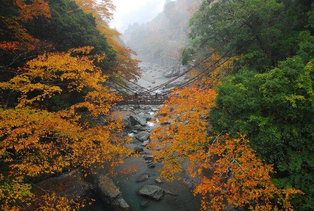 祖谷のかずら橋の紅葉