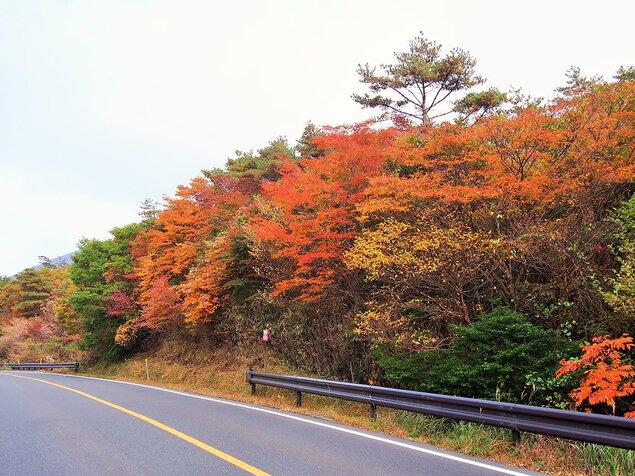 県道1号線(丸尾-大浪池登山口)の紅葉