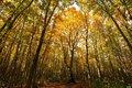 安比高原ブナの二次林