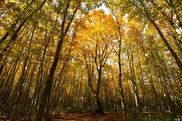 安比高原ブナ二次林