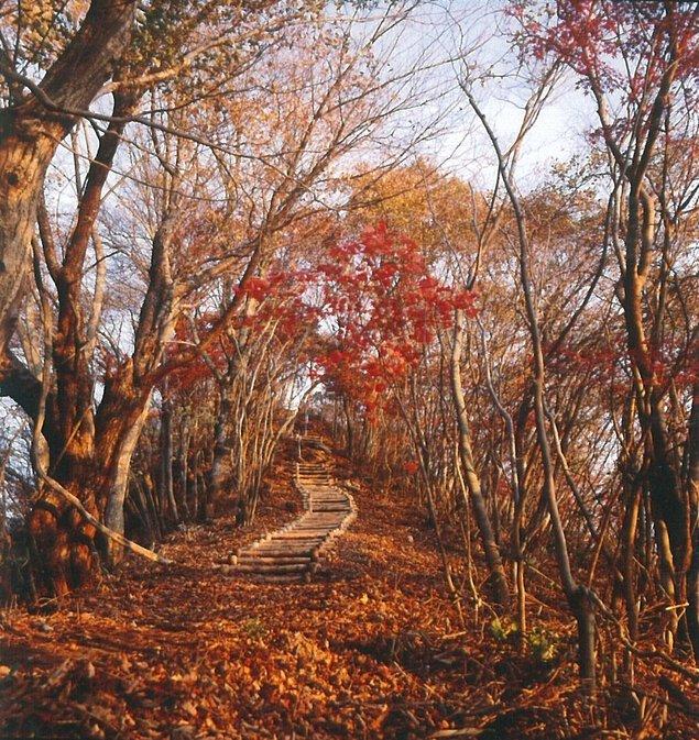 鎌倉岳遊歩道の紅葉
