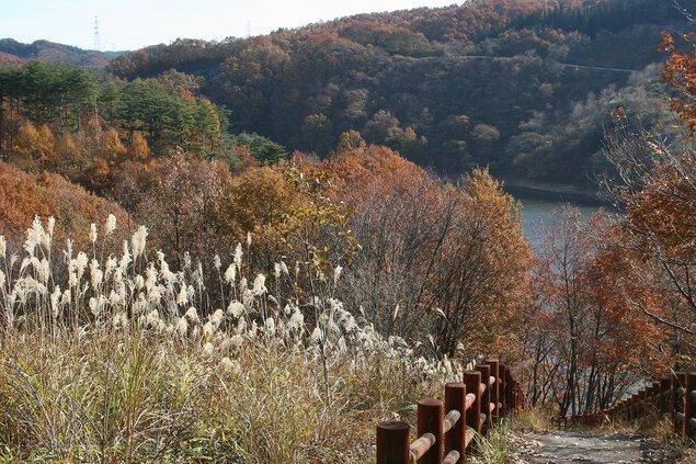母畑湖の紅葉