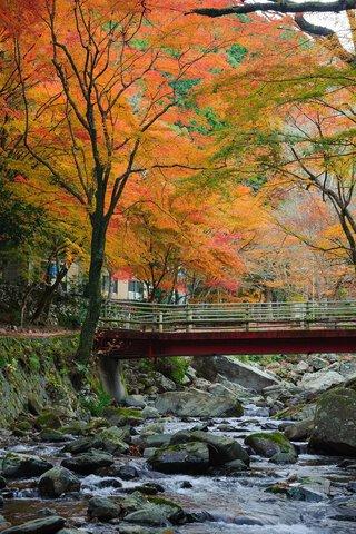 くらがり渓谷の紅葉