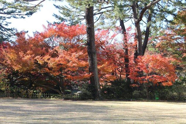 東京都庭園美術館の紅葉