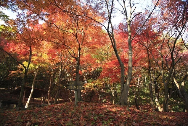 摂津峡公園の紅葉