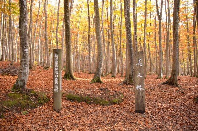 美人林の紅葉