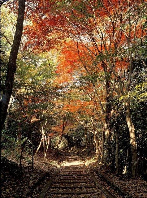 龍野公園 紅葉谷・聚遠亭の紅葉