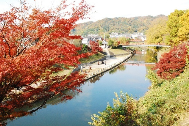 【紅葉・見頃】奈良県立竜田公園