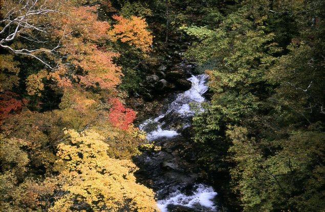五色渓谷の紅葉