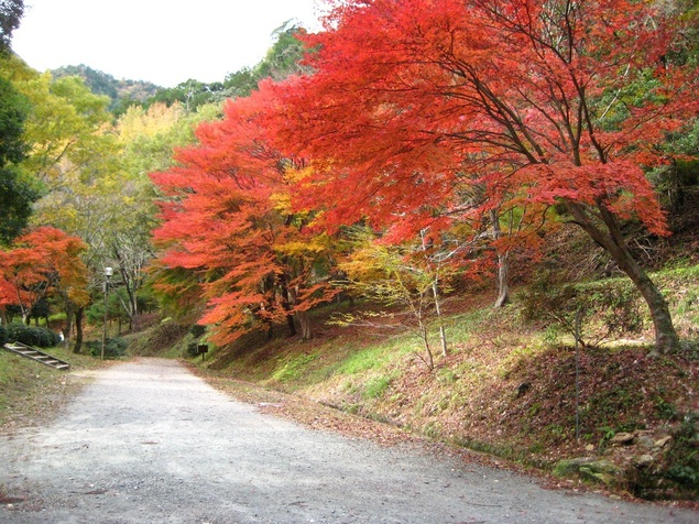 愛知県民の森の紅葉