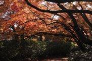 清水公園(千葉県)