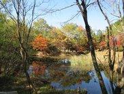タカドヤ湿地