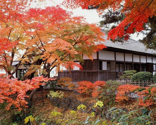 松島(観瀾亭)の紅葉