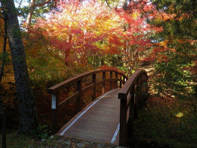 【紅葉・見頃】静岡県立森林公園