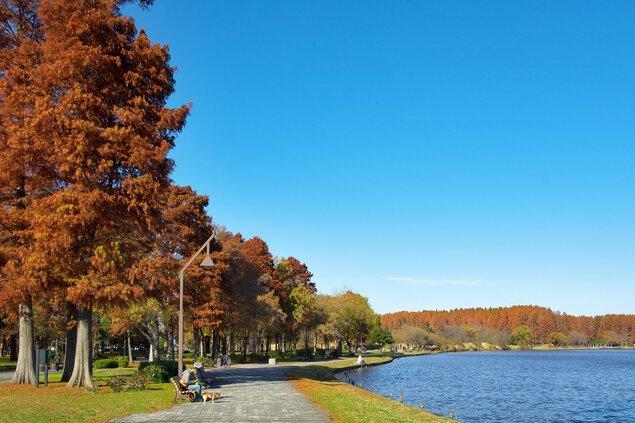 水元公園の紅葉