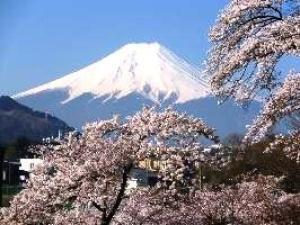 【桜・見ごろ】西桂町忠魂碑の桜並木