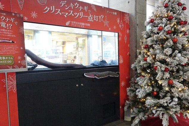 デンキウナギでクリスマスツリー点灯!?