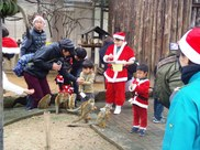 動物園のクリスマス