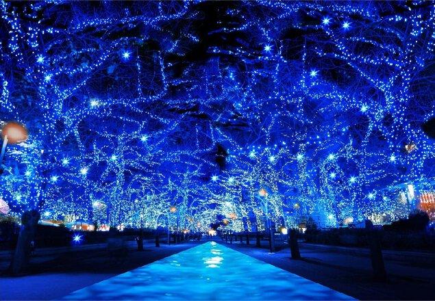Parque de Yoyogi zelkova arborizada - Shibuya Koen-dori