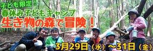 春休み子どもキャンプ 生きものの森で冒険!