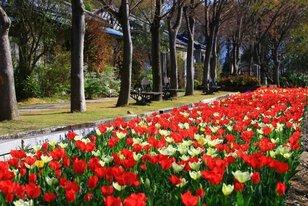 【花・見ごろ】四国村のチューリップ